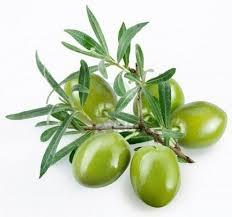 انواع زیتون سبز